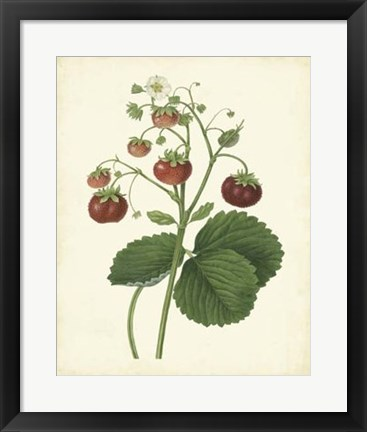 Framed Plantation Strawberries I Print