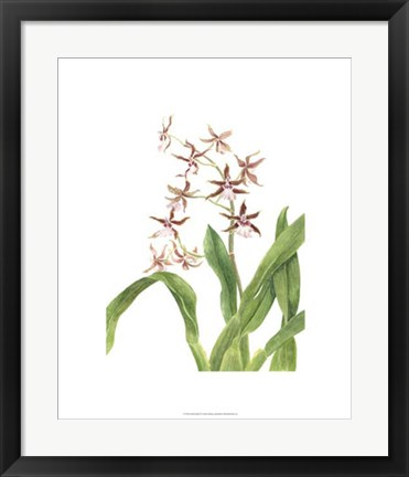 Framed Orchid Study III Print