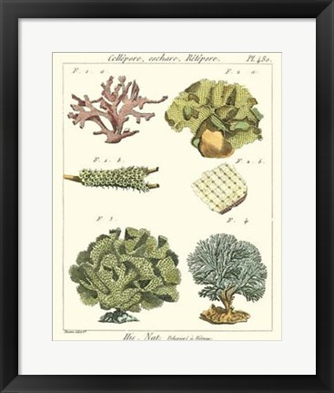Framed Coral Classification II Print