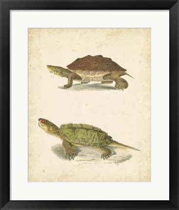 Framed Turtle Duo II Print
