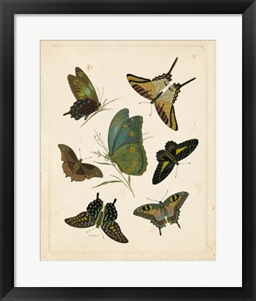 Framed Antique Entomology I Print