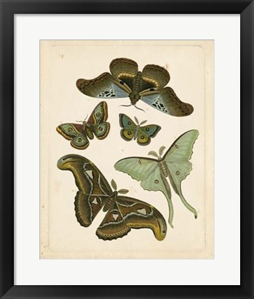 Framed Antique Entomology II Print