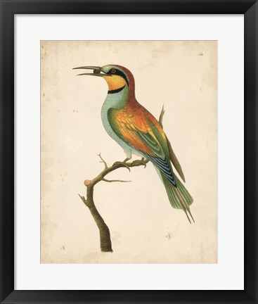 Framed Tropical Bird I Print