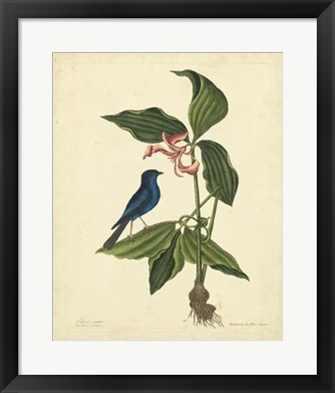 Framed Bird & Botanical IV Print