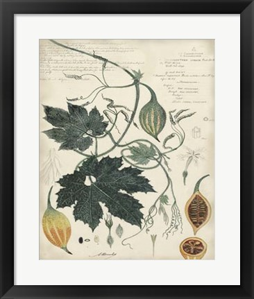 Framed Botanical by Descube I Print