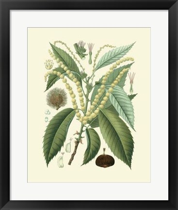 Framed Botanical Glory II Print
