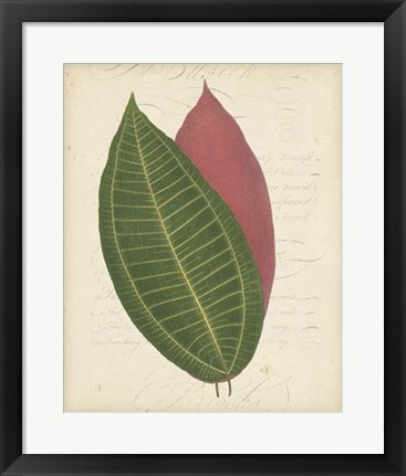 Framed Textured Leaf Study I Print