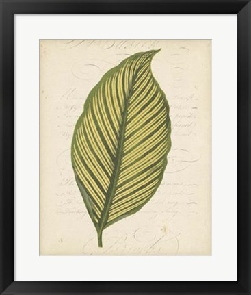 Framed Textured Leaf Study IV Print