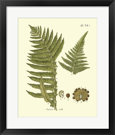Framed Antique Fern III Print