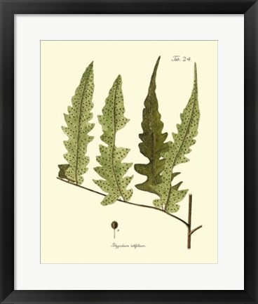 Framed Antique Fern VII Print