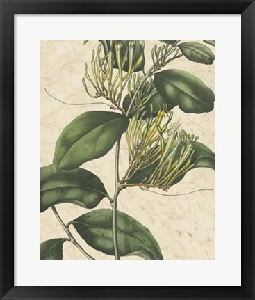 Framed Botanic Beauty IV Print