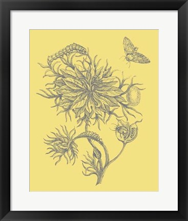 Framed Nature's Optimism II Print