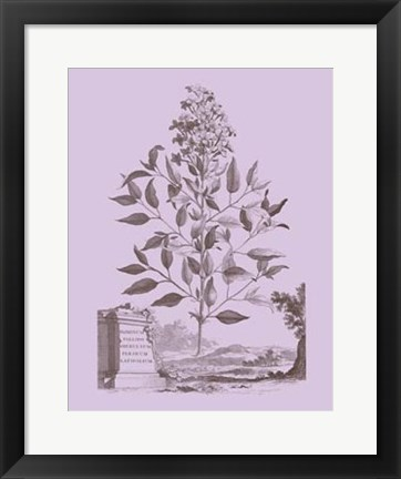 Framed Romantic Jasmine Print