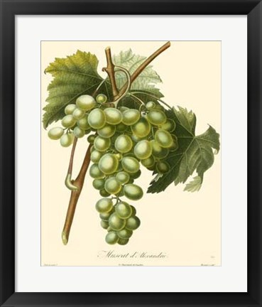Framed Grapes I Print
