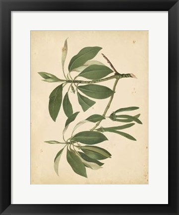 Framed Nature's Greenery IX Print