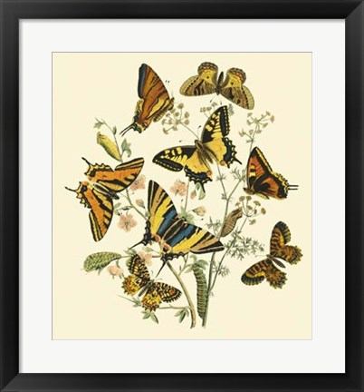 Framed Butterfly Gathering I Print