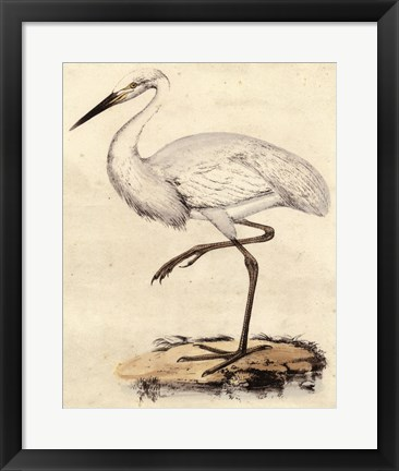 Framed Antique Heron III Print