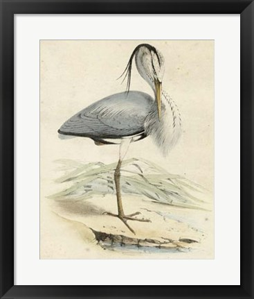 Framed Antique Heron IV Print