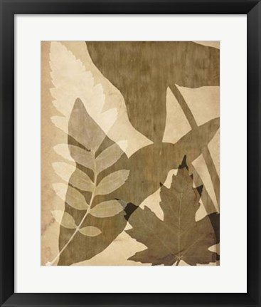 Framed Pressed Leaf Assemblage I Print