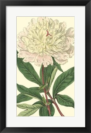 Framed Chinese Peony Print