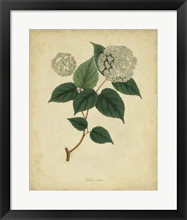 Framed Botanical VI Print