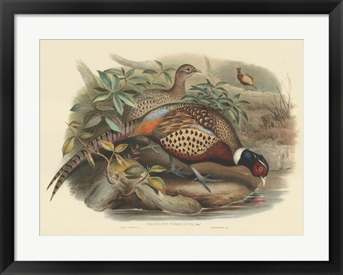 Framed Pheasants I Print
