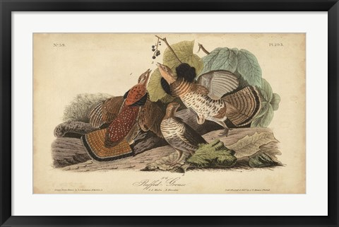 Framed Audubon Ruffed Grouse Print
