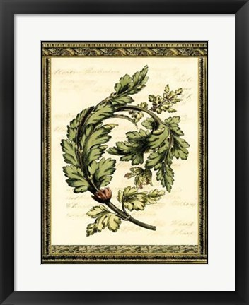 Framed Leaves of Elegance II Print
