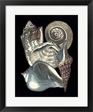 Framed Seashell Anthology I Print