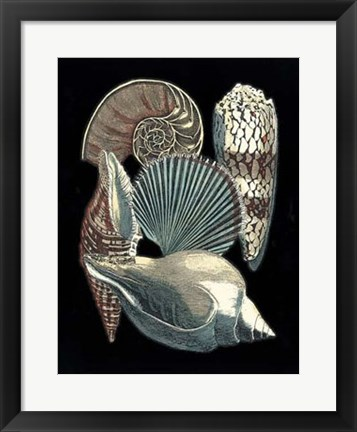 Framed Seashell Anthology II Print