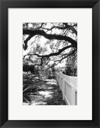 Framed Summer Shade I Print