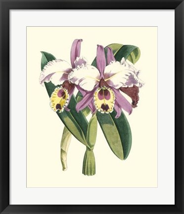 Framed Magnificent Orchid I Print