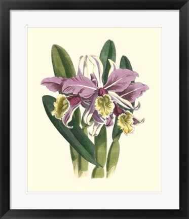Framed Magnificent Orchid IV Print