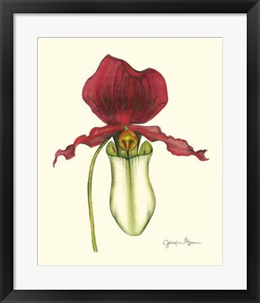 Framed Majestic Orchid I Print