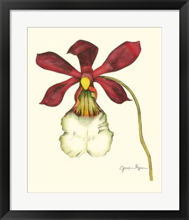 Framed Majestic Orchid II Print