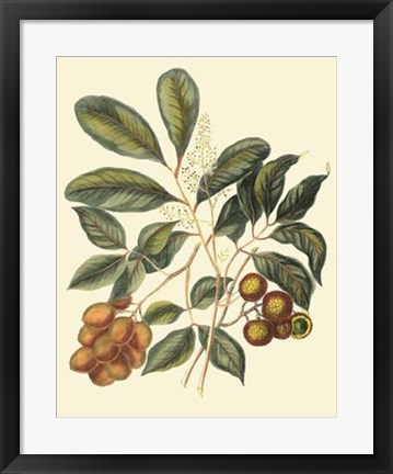 Framed Foliage, Flowers & Fruit I Print