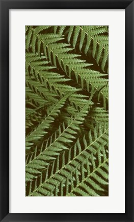 Framed Patterned Nature II Print