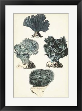 Framed Coral Species I Print