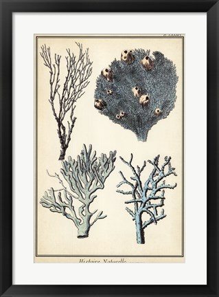 Framed Coral Species II Print