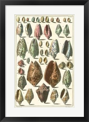 Framed Shell Collection I Print