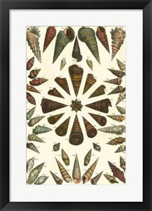 Framed Shell Collection II Print