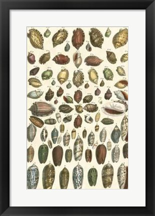 Framed Shell Collection VI Print