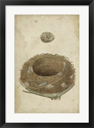 Framed Bird's Nest Study I Print