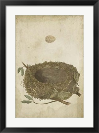 Framed Bird's Nest Study II Print