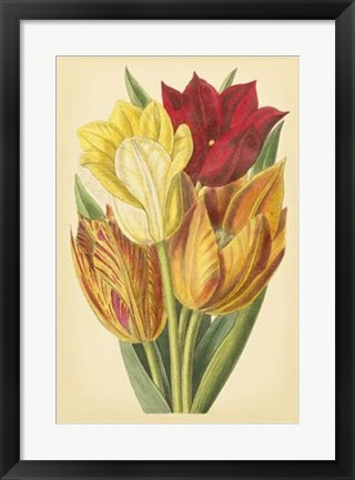 Framed Tulip Array II Print