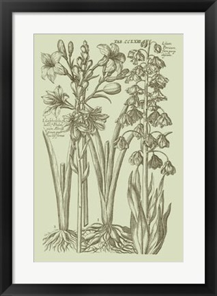 Framed Garden of Flora II Print