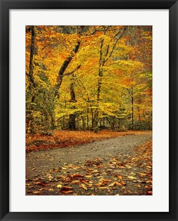Framed Path through Autumn Print