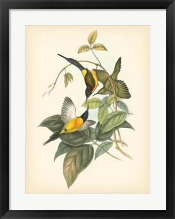 Framed Birds of the Tropics IV Print