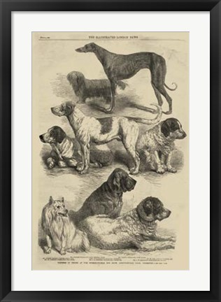 Framed International Dog Show I Print