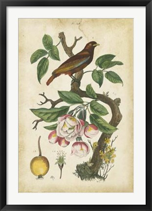 Framed Antique Bird in Nature I Print